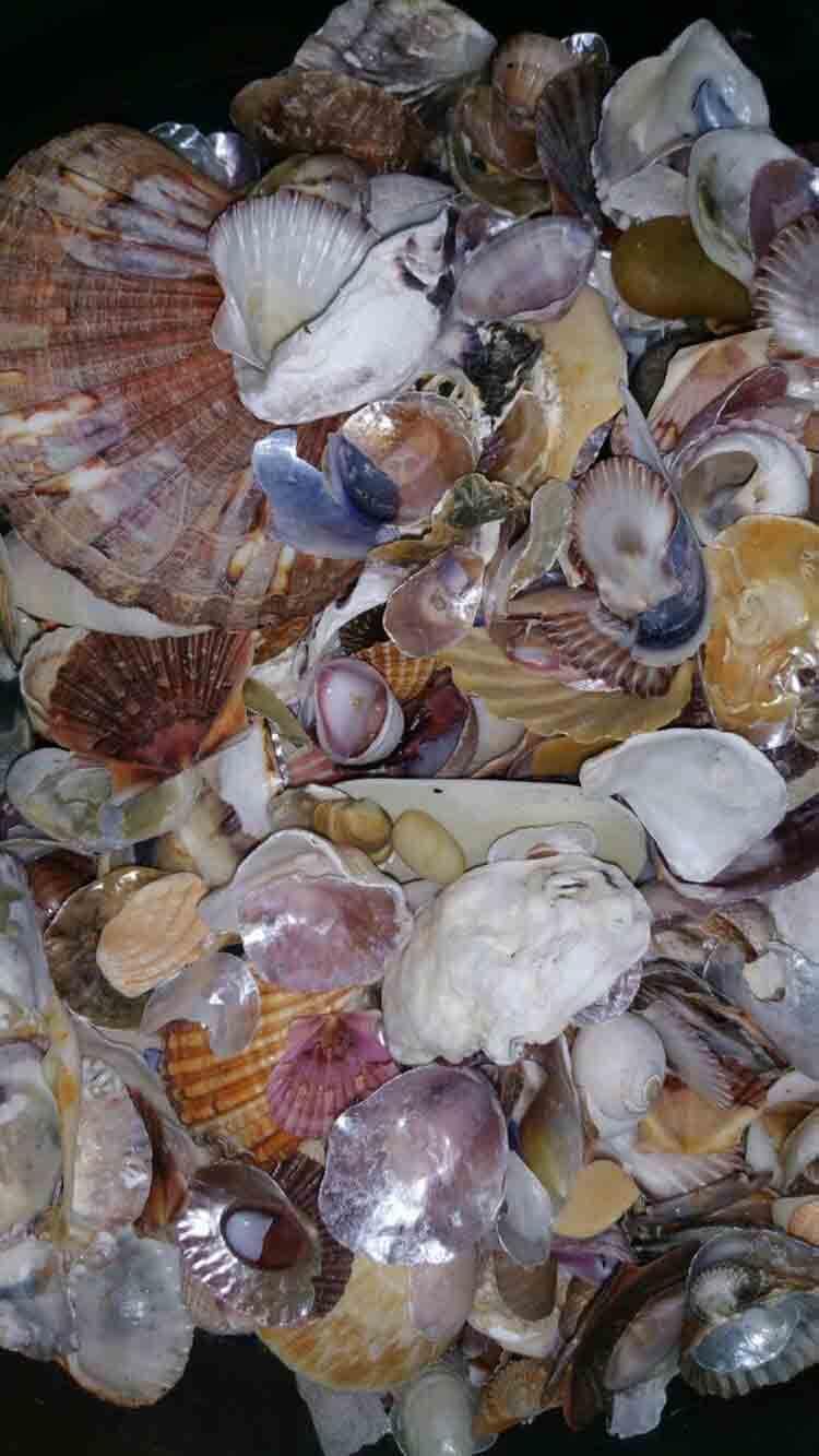 conchas-mejillones-mar